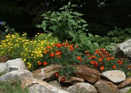 native plants in landscape management mixing it up can edibles and ornamentals get along in a designed