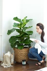 Apartment Plants The Best Indoor Plants And How To Keep Them Alive And Thriving