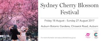 for sydney cherry blossom festival in auburn from ticketbooth