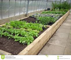 greenhouse for vegetable garden raised beds in greenhouse stock image image of salad 68368395