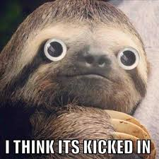 Sloth Whisper Meme - not sure if this is a repost or not but sloths
