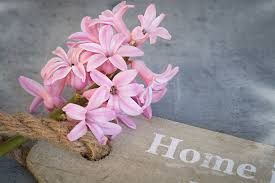 Hyacinth Flower Free Photo Hyacinth Flower Pink Pink Flower Free Image On