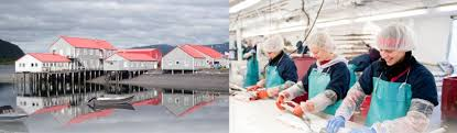 working at icicle seafoods inc 87 reviews indeed com