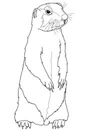 prairie dog coloring free printable coloring pages