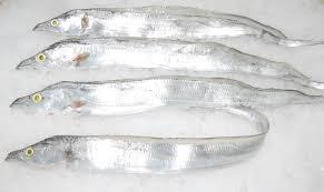 ribbon with names ribbon fish burum seafood company