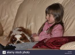 the sofa kings dog cavalier king charles spaniel on the knees of a little on