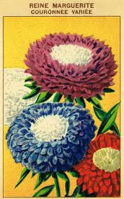 vintage seed packets antique farmhouse seed packet prints knick of time