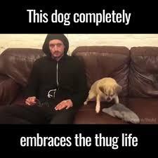 Thug Life Memes - thug life album on imgur