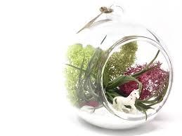 unicorn diy air plant terrarium kit by house of moss