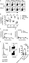 cd4 t cells specific for a latency associated γ herpesvirus