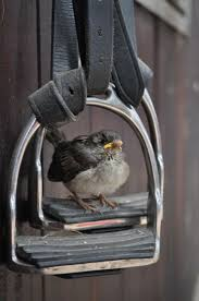 74 best brilliant birds images on pinterest beautiful birds