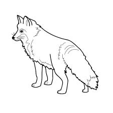 coloriage renard polaire a imprimer gratuit