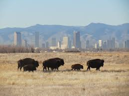 Bison Connect Department Of Interior In Cities Across The U S Americans Will Gain Improved Access To