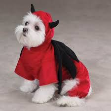 7 halloween costumes for dogs that would actually scare dogs