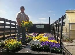 Flowers Salinas - sakata seed america supports the annual salinas valley fair