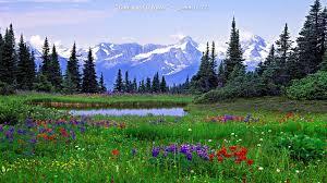 rocky mountain national park wallpapers rocky mountain wildflowers photos 18 desktop wallpaper