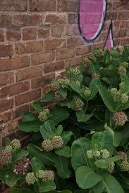 native plants of wisconsin flowers of wisconsin daniel mount gardens
