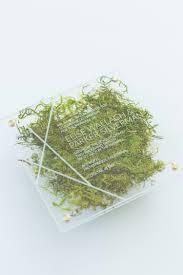 yonder design moss invitation wedding invitation custom