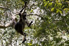 free stock photo 1707 monkey business freeimageslive
