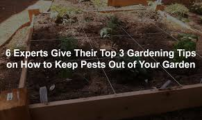How To Keep Pests Away From Garden - 6 experts give their top 3 gardening tips on how to keep pests out