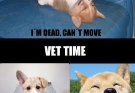 Dog At Vet Meme - dog playin dead archives what breed is it