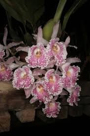 wild orchid home decor best 25 orchid images ideas on pinterest wild orchid orchid