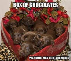Cute Valentine Memes - 20 cute and funny valentine s day memes sayingimages com