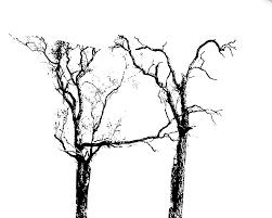 h shaped trees u2013 jake maya kids journal