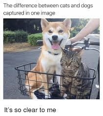 Funny Cat And Dog Memes - the difference between cats and dogs captured in one image it s so