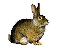 bunny png images transparent free download pngmart com