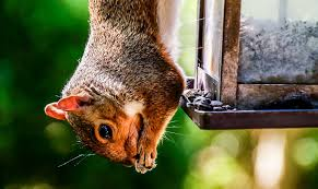 guard your garden squirrels official blog of park seed