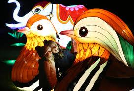 Zoo Lights Discount Tickets Wild Lights At Dublin Zoo