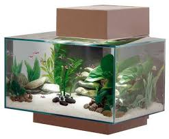 Fluval Edge Aquascape Fluval Edge 23l Aquarium Pewter With Day And Night Led Lighting
