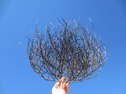 Tumbleweed by Black Tumbleweed Brittnyism