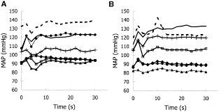 Map Mean Arterial Pressure Exercise Pressor Reflex In Decerebrate And Anesthetized Rats