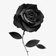 black roses black painted roses illustrator png image and