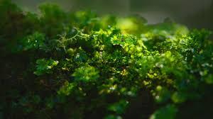 hd pics photos stunning attractive nature green small plants macro