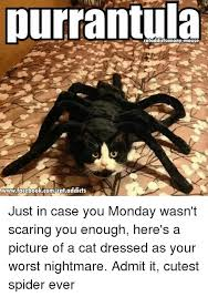 Cute Spider Meme - purrantula wwwfacebookcomcat addicts just in case you monday wasn