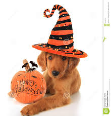 cute happy halloween images halloween puppy stock image image 34163721
