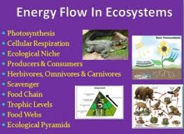 day by day classroom breakdown ecology and ecosystems