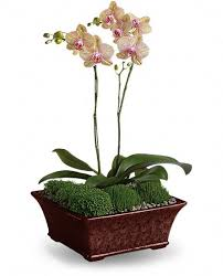 Orchid Plant Send A Sympathy Plant From Sears Canada