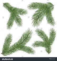 spruce branch vector illustration isolated on stock vector