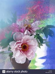Peony Arrangement Vase Peonies Paeonia Officinalis Arrangement Flower