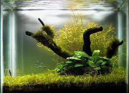 Aquascape Design Home Design My Aquascaping Layout Design Aquascape Design Layout