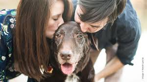 pets news tips u0026 guides glamour including pets in your portrait business behind the shutter