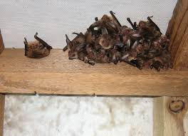 roost visitor training bat conservation trust