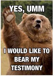 Bear Memes - best 25 bear meme ideas on pinterest black bear attacks bear