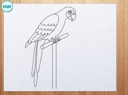 how to draw parrot youtube