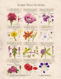 A Beautiful Poster By Our Friends At Botanical Arts Press Urban