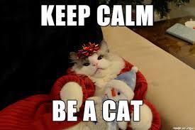 Stay Calm Meme - keep calm be a cat meme on imgur